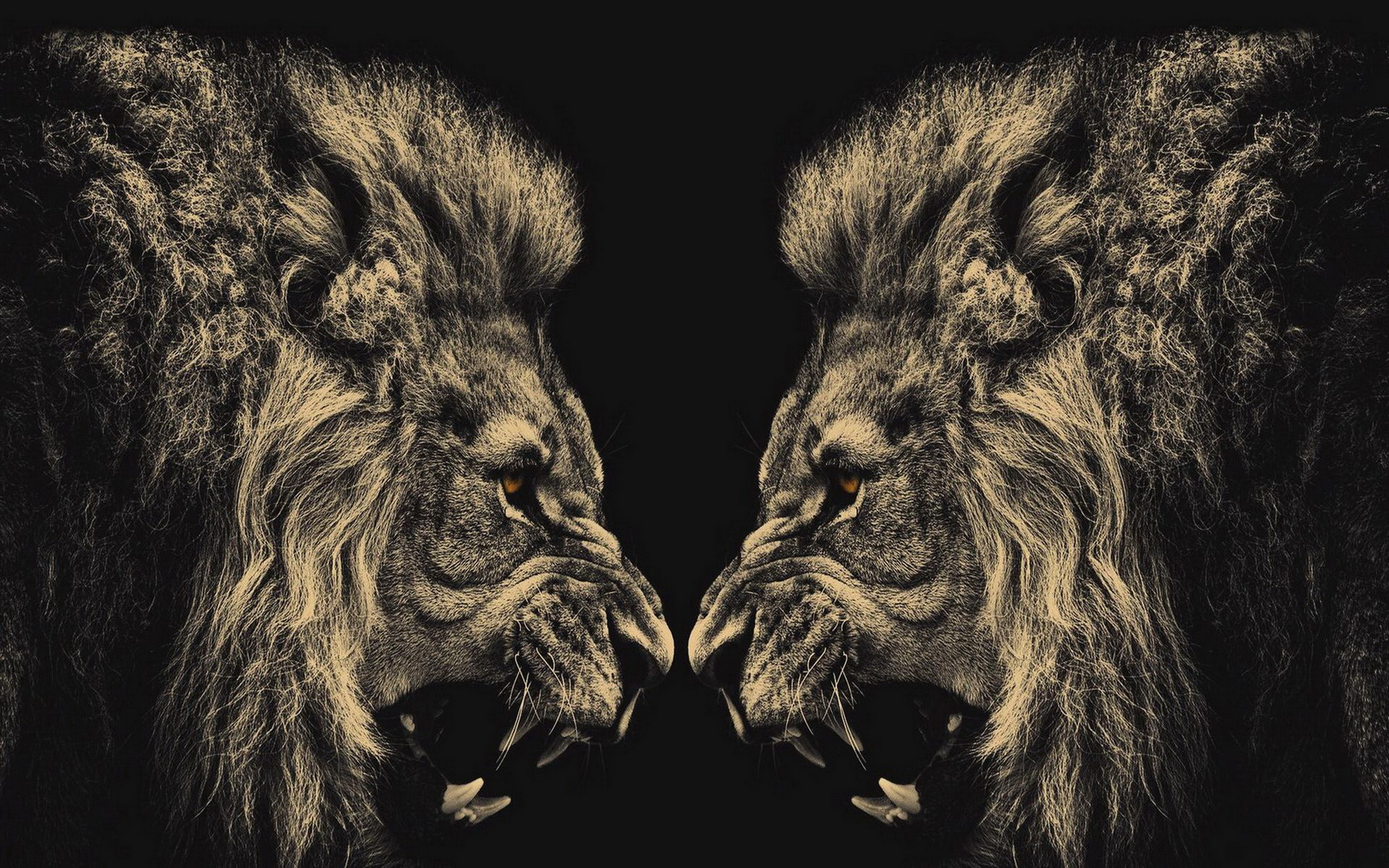 lion wallpaper screensaver hd #10258 wallpaper | walldiskpaper