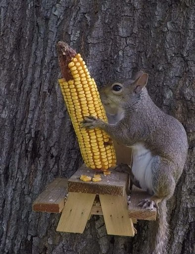 Squirrel Gift for Dad