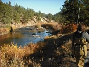 South Platte Trout Fishing 3