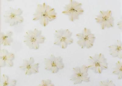 71120 Fiore bianco