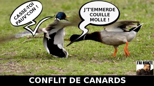 j-ai-honte-conflit-de-canards