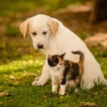 Kittens And Puppies Wallpapers Group 74