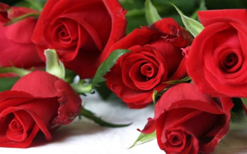 Cute Red Rose Wallpapers Hd Djiwallpaper Co