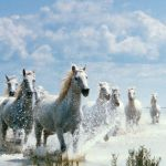 Seven Horse Wallpapers Group 53