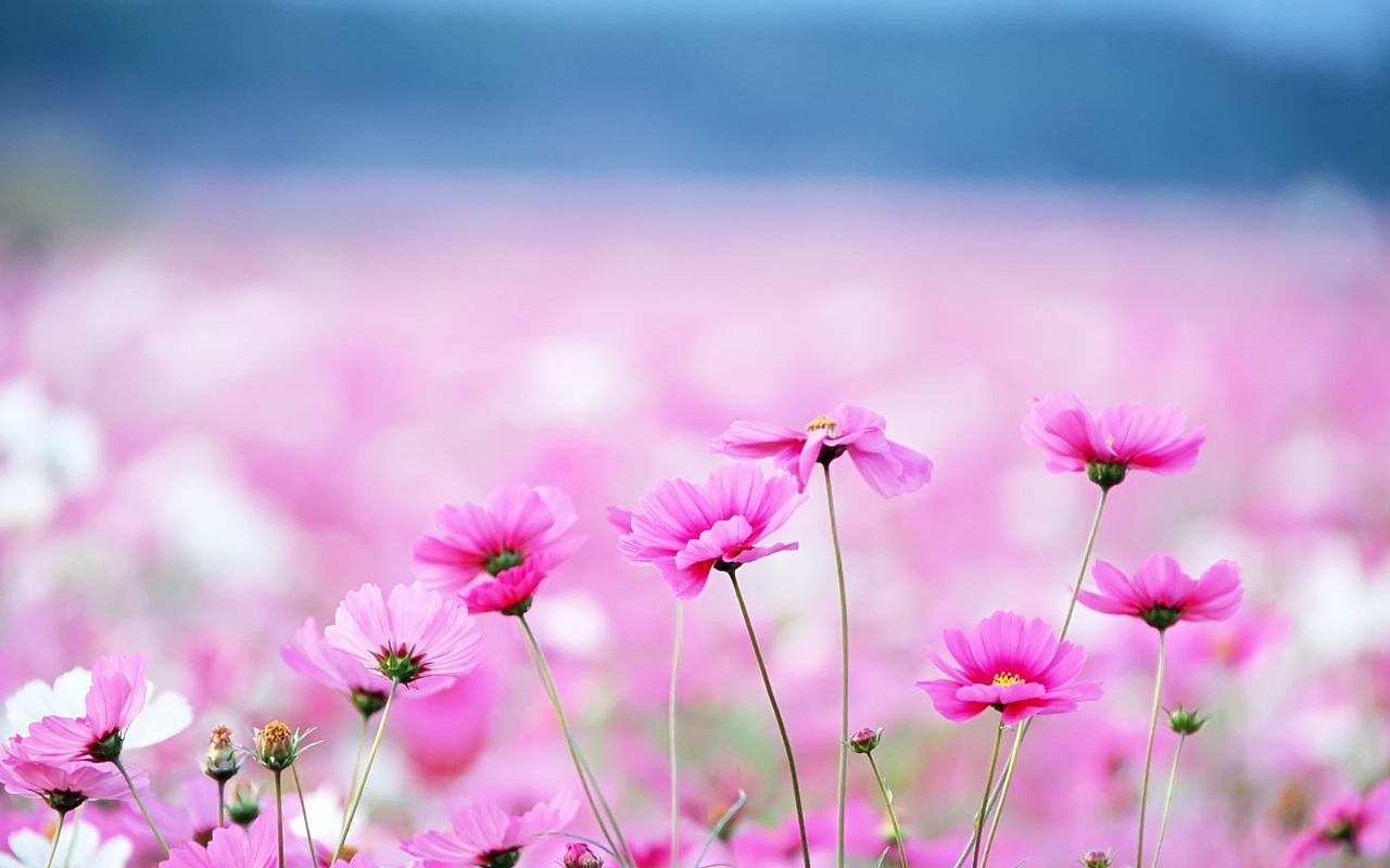 Wallpapers Hd Flower Group 91