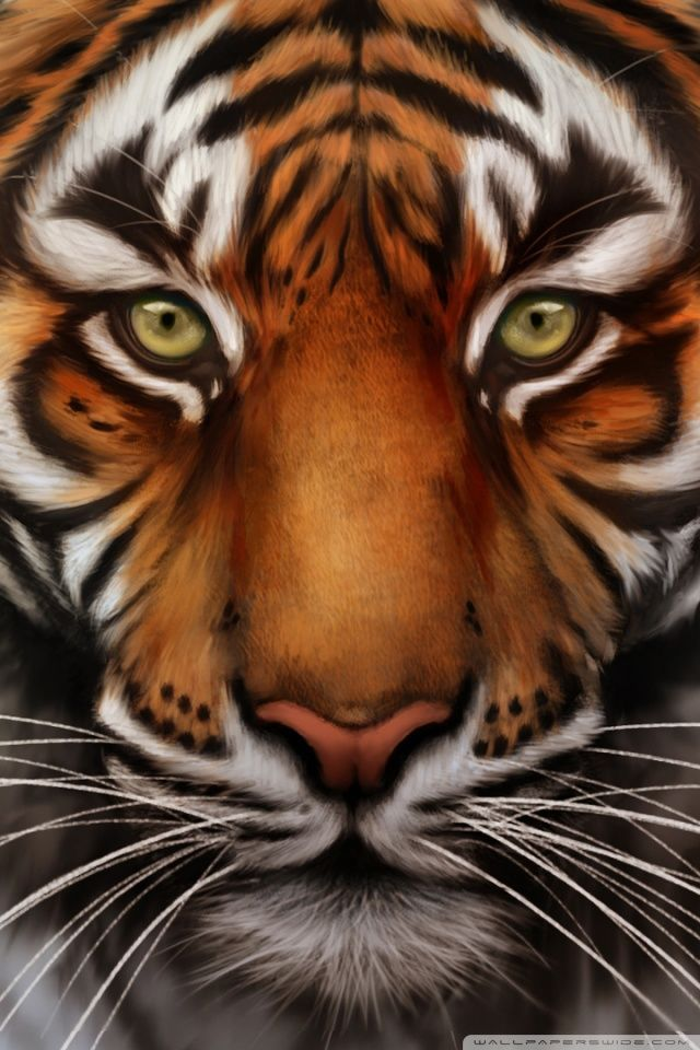 Tiger Mobile Wallpapers Group 24