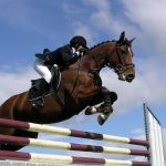 Horse Jumping Wallpapers Group 85