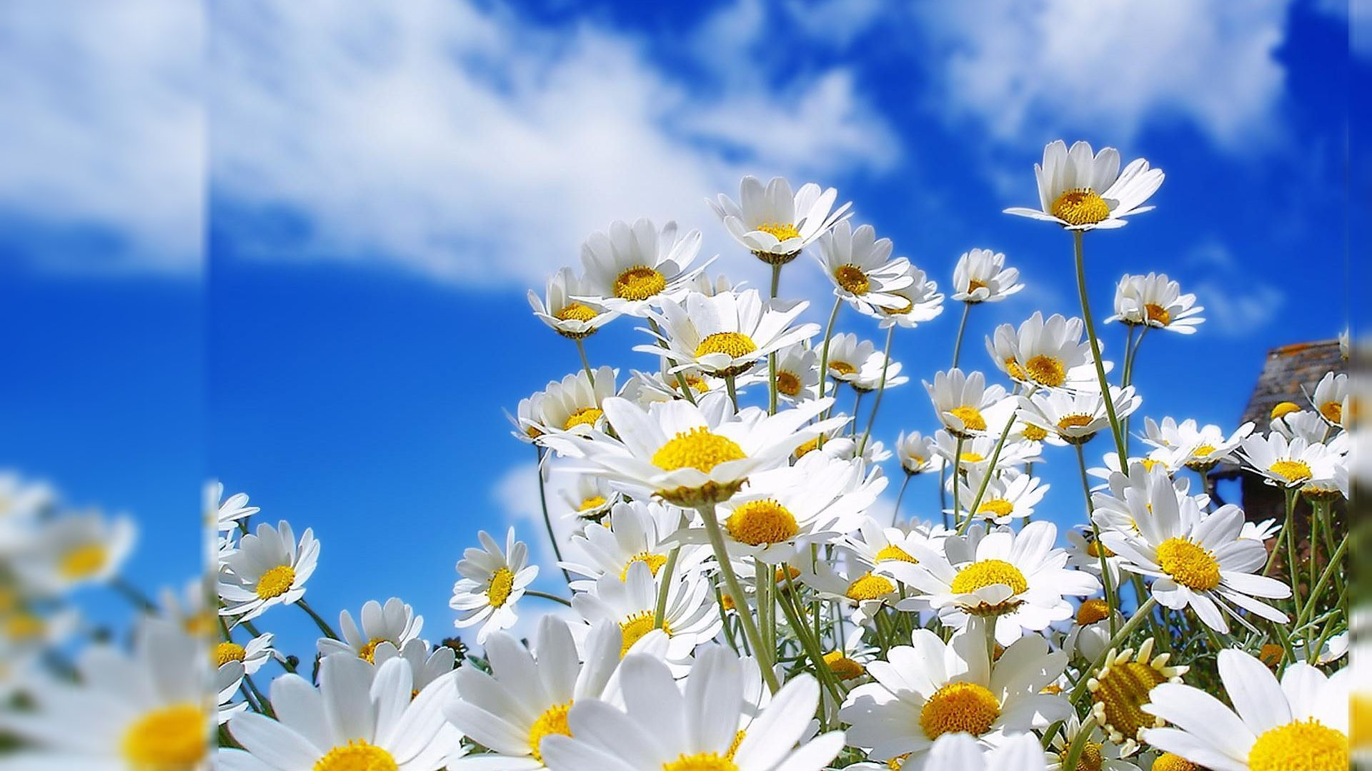 Floral Desktop Wallpapers Hd Wallpapers Backgrounds Of Your Choice