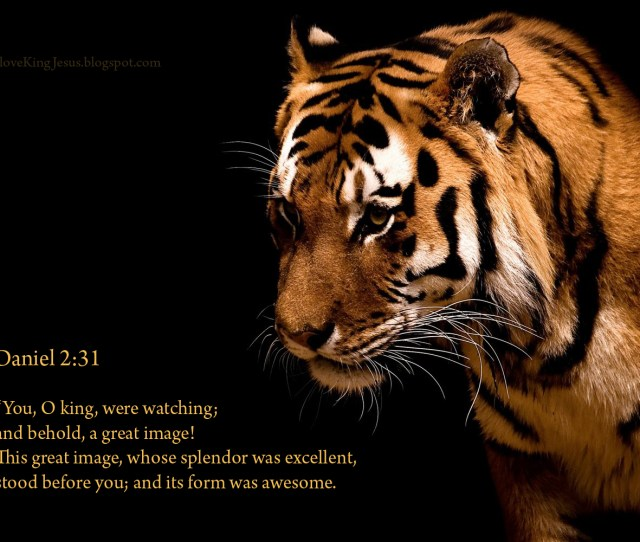 Daniel 231 Awesome King