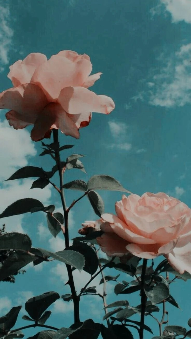 Flower Aesthetic Tumblr Wallpapers Top Free Flower Aesthetic Tumblr Backgrounds Wallpaperaccess