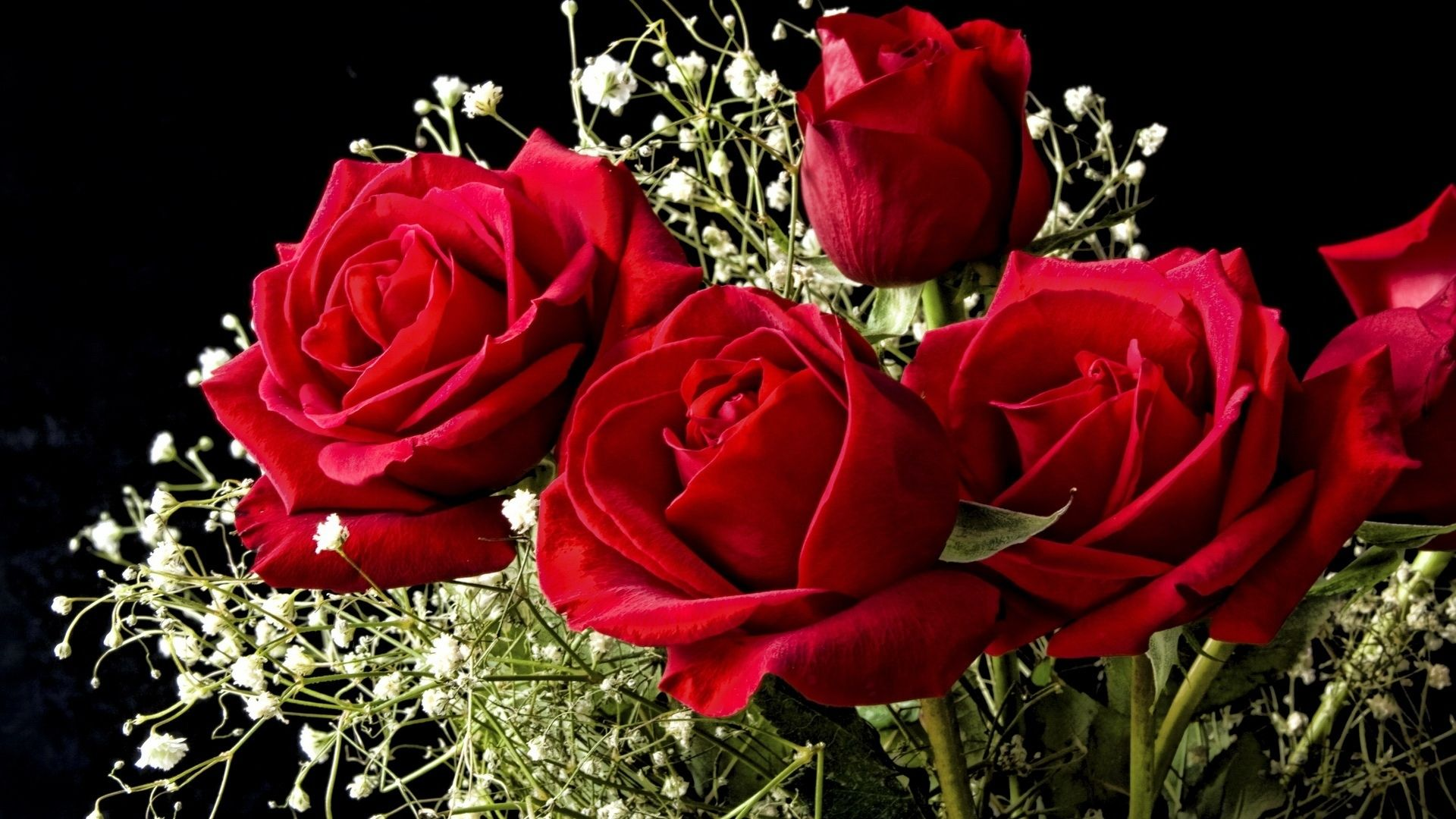 Rose Flower Wallpapers Top Free Rose Flower Backgrounds Wallpaperaccess