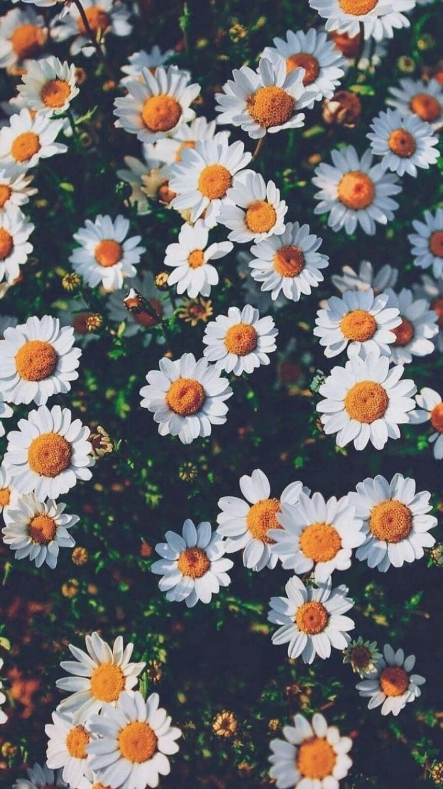 Tumblr Flower Wallpapers Top Free Tumblr Flower Backgrounds Wallpaperaccess