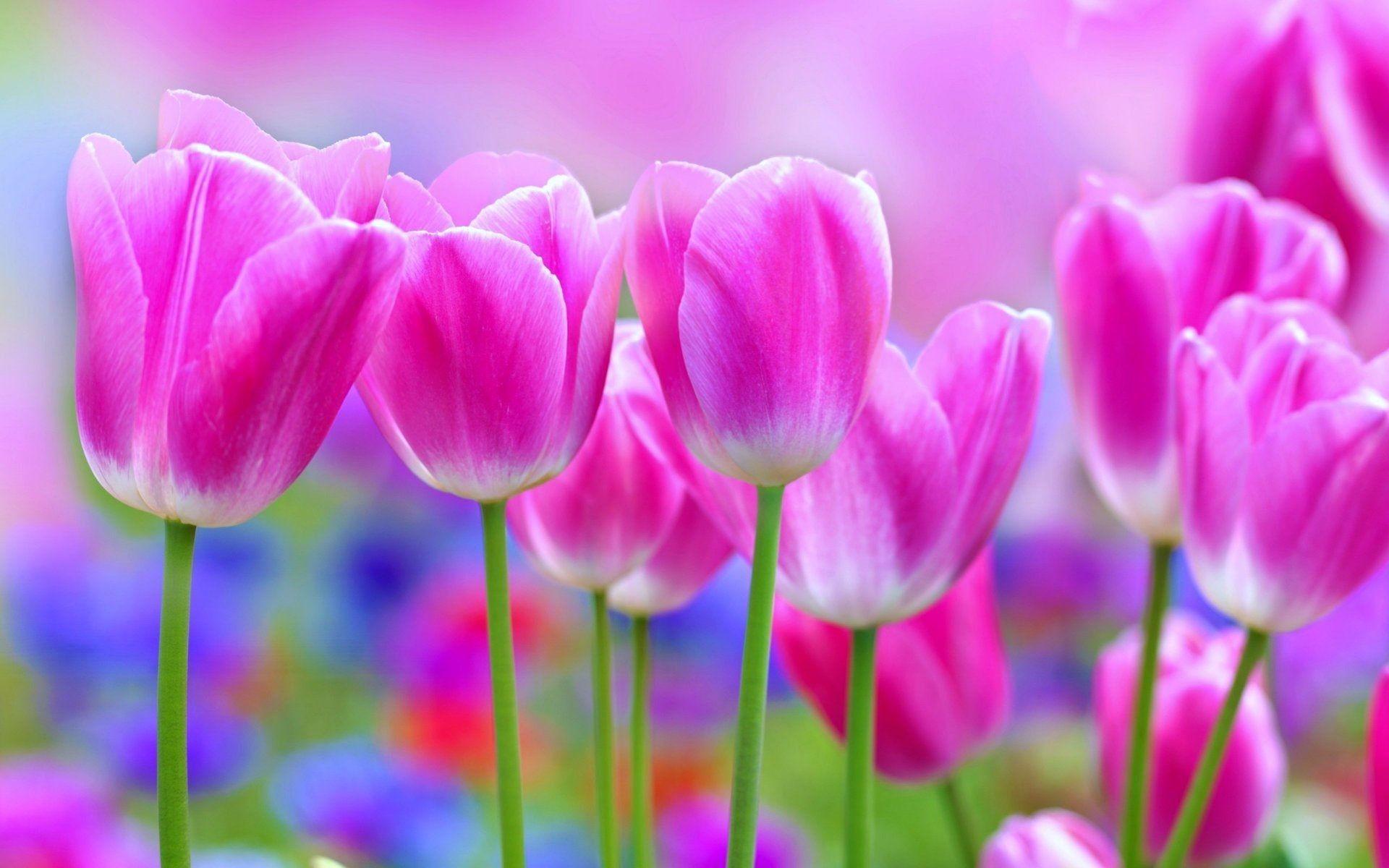 Beautiful Flowers Wallpapers Top Free Beautiful Flowers Backgrounds Wallpaperaccess