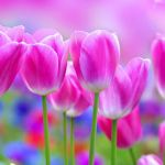Pretty Flowers Wallpapers Top Free Pretty Flowers Backgrounds Wallpaperaccess