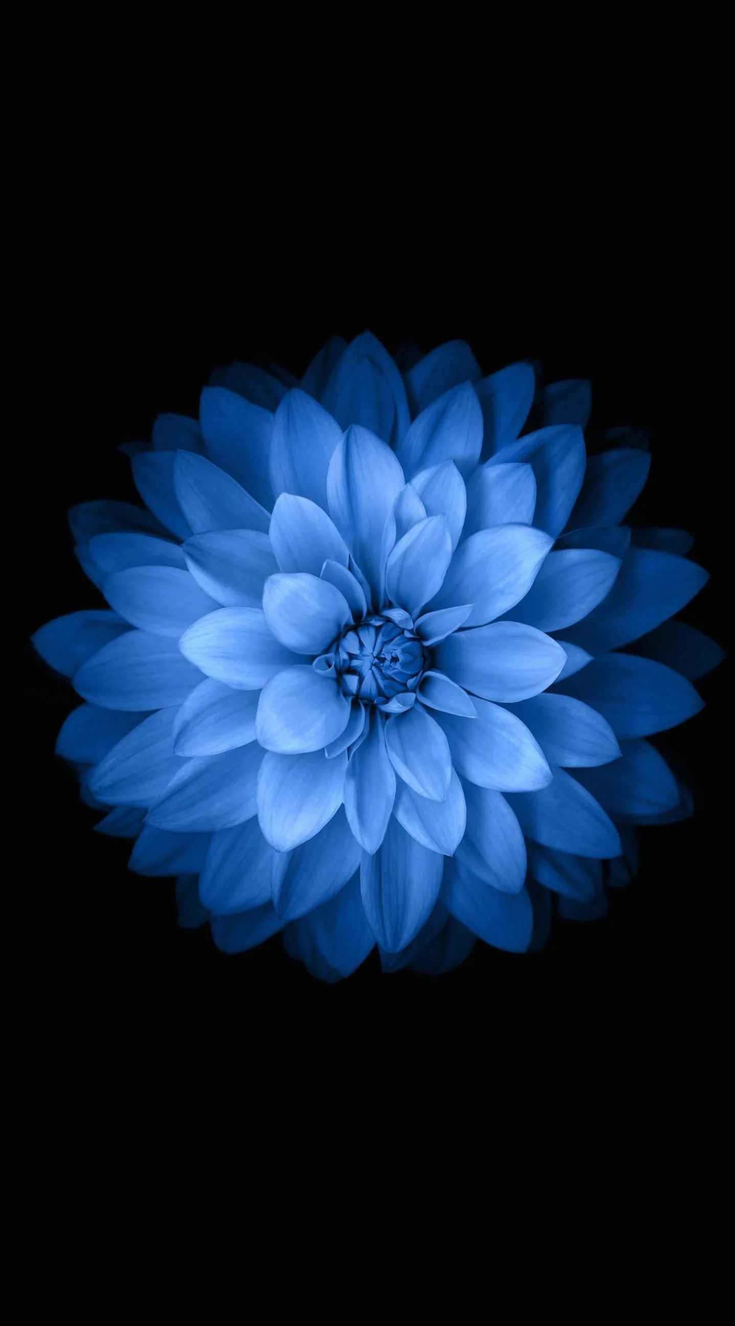 Blue Flower Iphone Wallpapers Top Free Blue Flower Iphone Backgrounds Wallpaperaccess