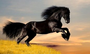 Mustang Horse Wallpapers - Top Free Mustang Horse Backgrounds ...