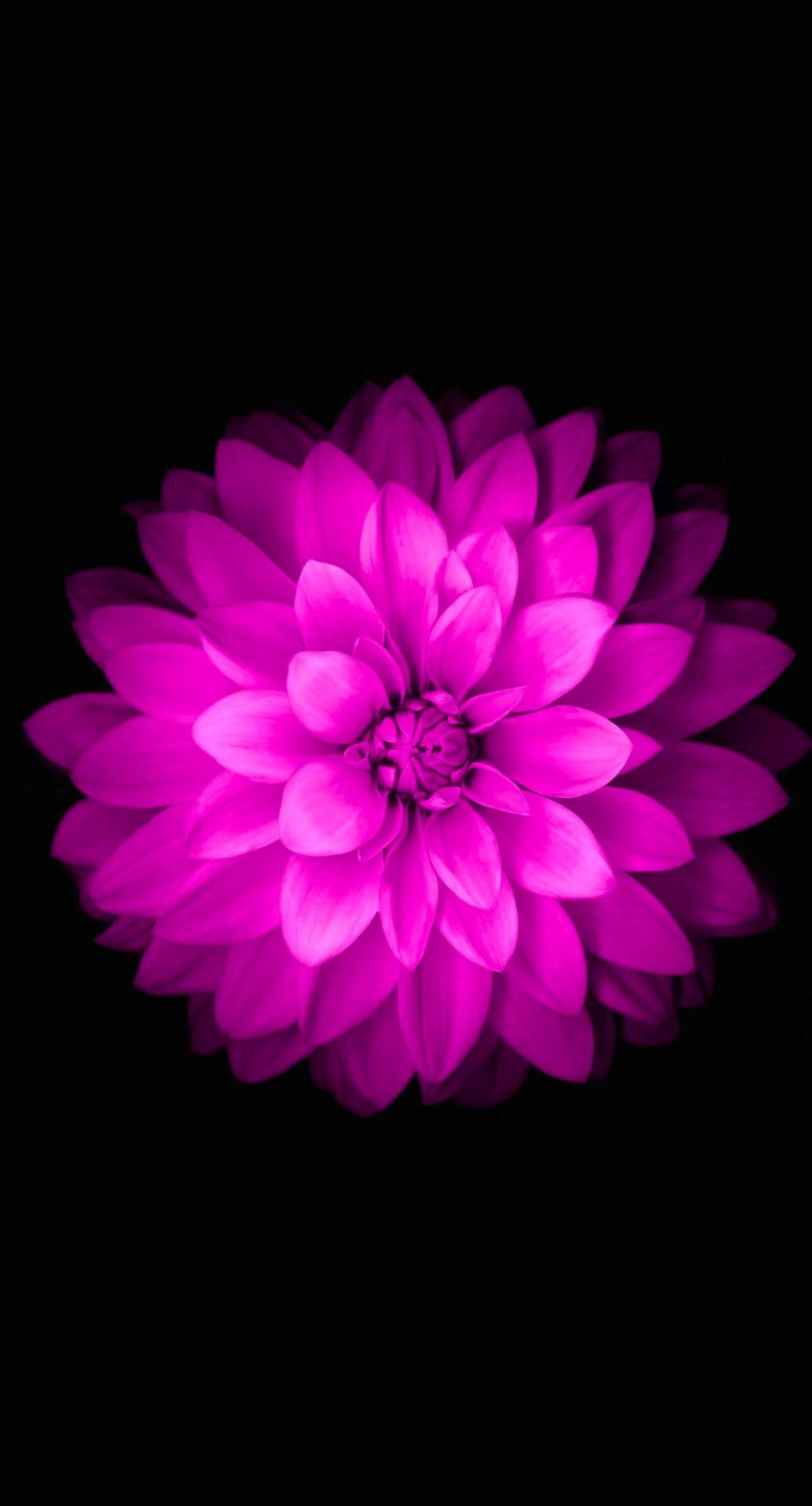 Purple Flower Iphone Wallpapers Top Free Purple Flower Iphone Backgrounds Wallpaperaccess