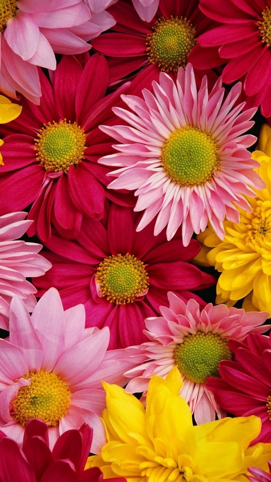 Flower Iphone Wallpapers Top Free Flower Iphone Backgrounds Wallpaperaccess