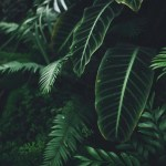 Aesthetic Grid Plants Wallpapers Top Free Aesthetic Grid Plants Backgrounds Wallpaperaccess