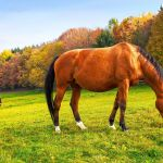 Autumn Horse Wallpapers Top Free Autumn Horse Backgrounds Wallpaperaccess