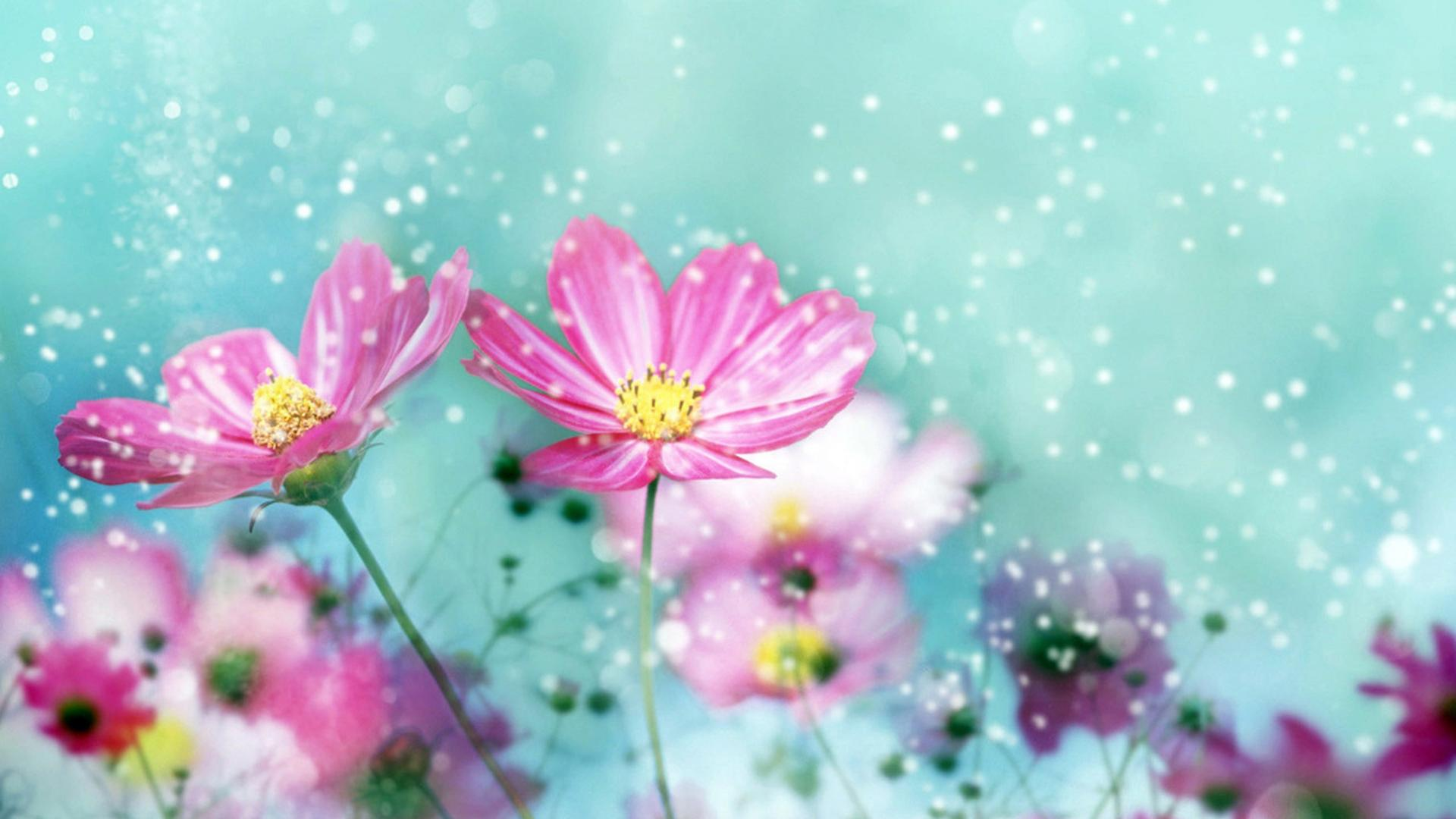 Cute Flower Wallpapers Top Free Cute Flower Backgrounds Wallpaperaccess