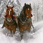 Christmas Horse Wallpapers Top Free Christmas Horse Backgrounds Wallpaperaccess