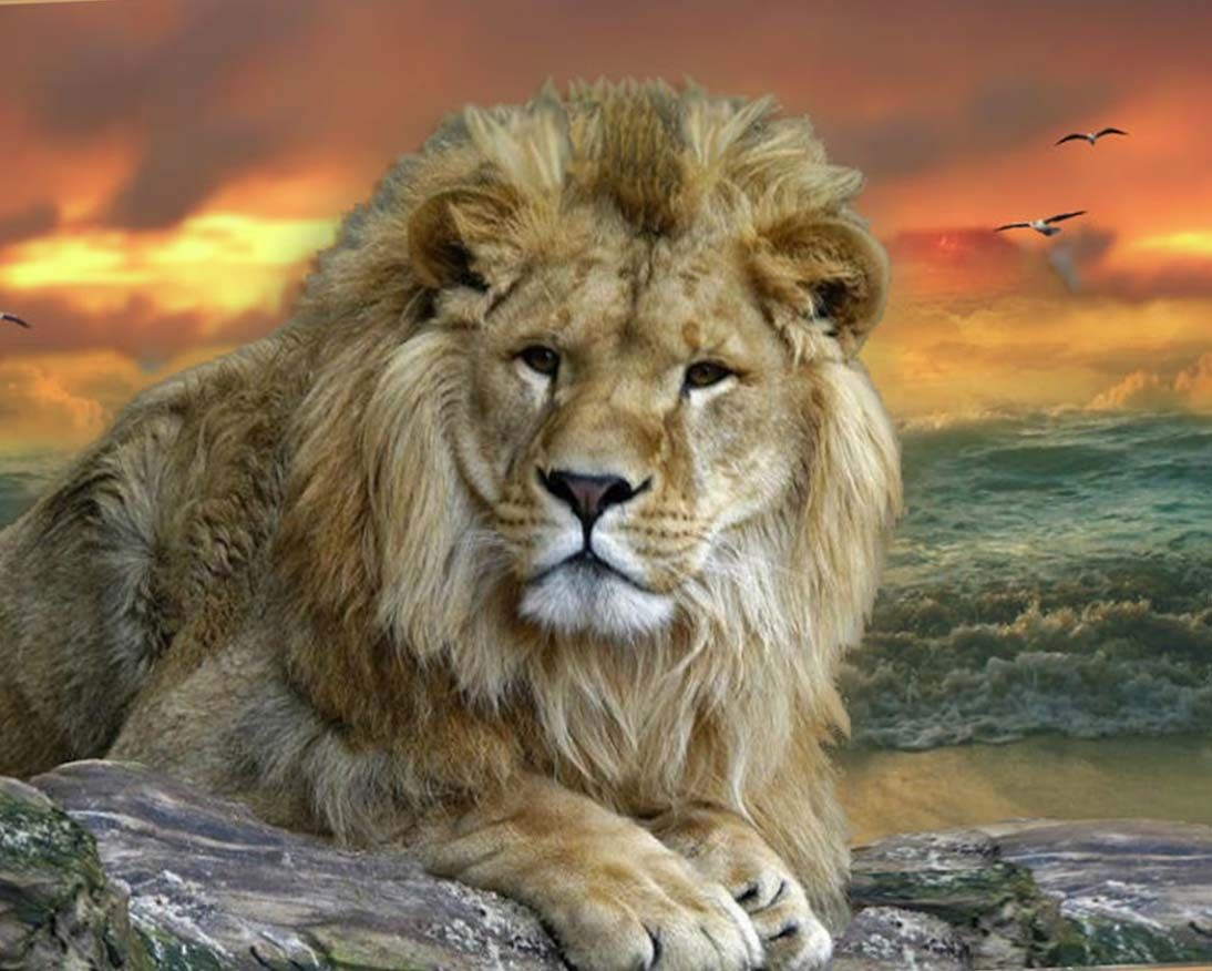 Wild Animal Wallpapers Top Free Wild Animal Backgrounds Wallpaperaccess