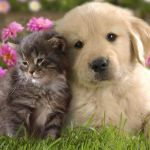 Cute Puppies And Kittens Wallpapers Top Free Cute Puppies And Kittens Backgrounds Wallpaperaccess