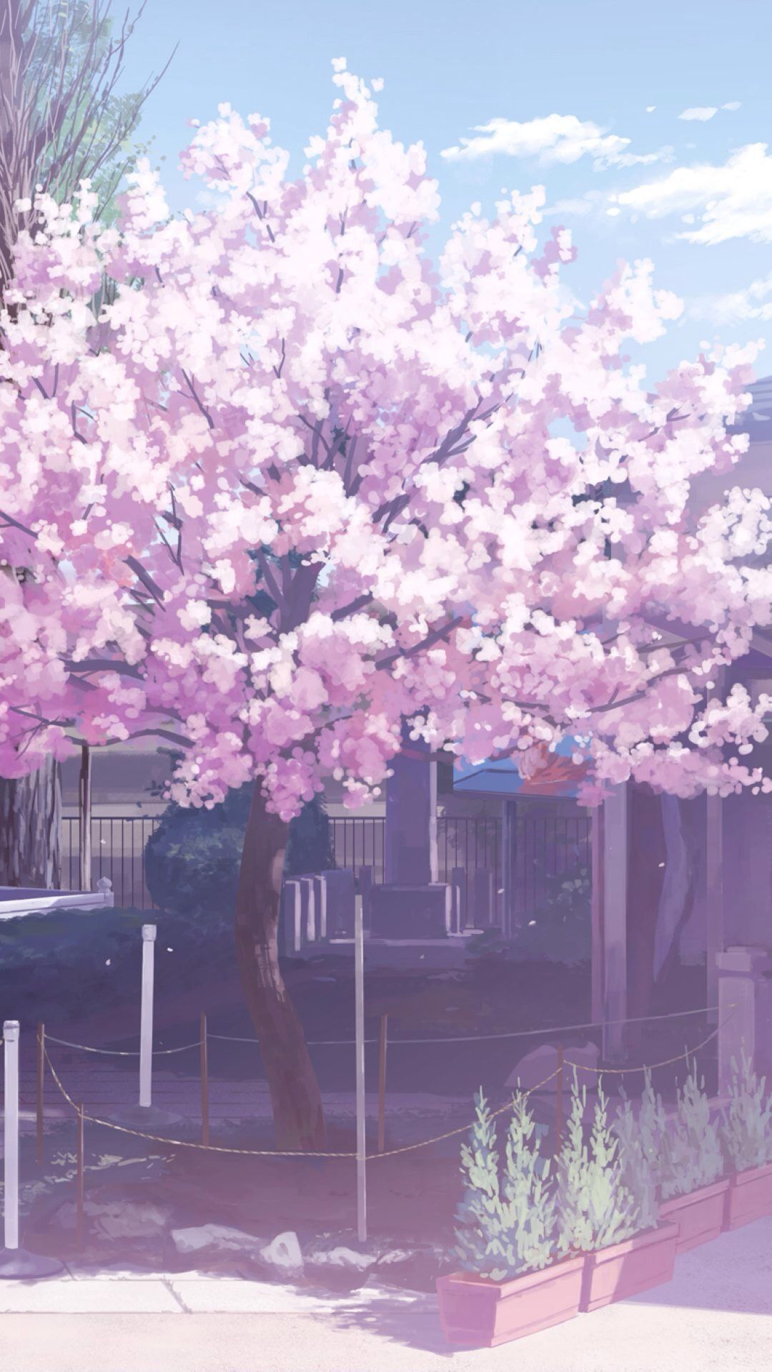 Cartoon Cherry Blossom Wallpapers Top Free Cartoon Cherry Blossom Backgrounds Wallpaperaccess