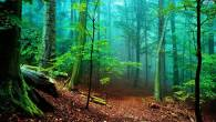 Permalink to Hd Forest Wallpaper Download