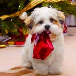 Christmas Dog Wallpapers Top Free Christmas Dog Backgrounds Wallpaperaccess