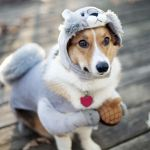 Funny Dog Wallpapers Top Free Funny Dog Backgrounds Wallpaperaccess
