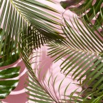 Cute Aesthetic Plant Wallpapers Top Free Cute Aesthetic Plant Backgrounds Wallpaperaccess