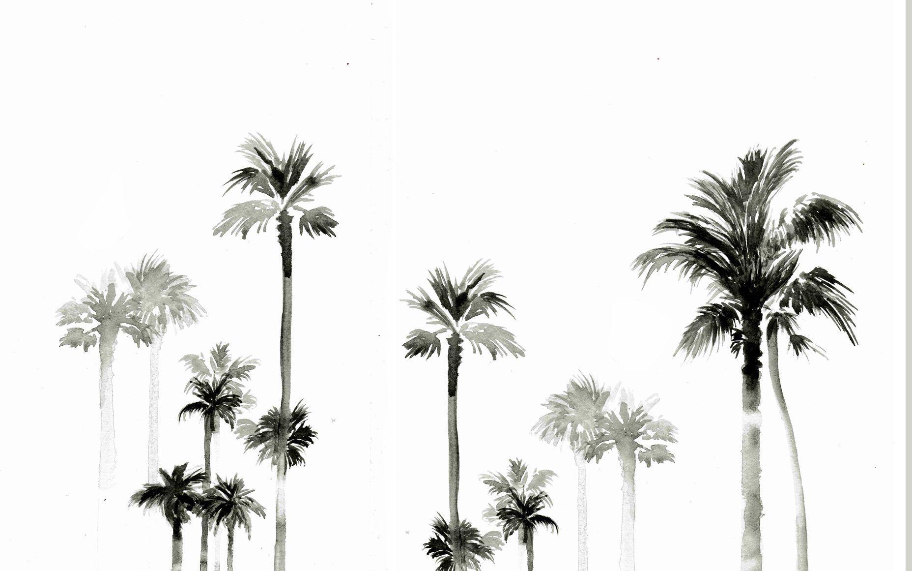 Palm Desktop Wallpapers