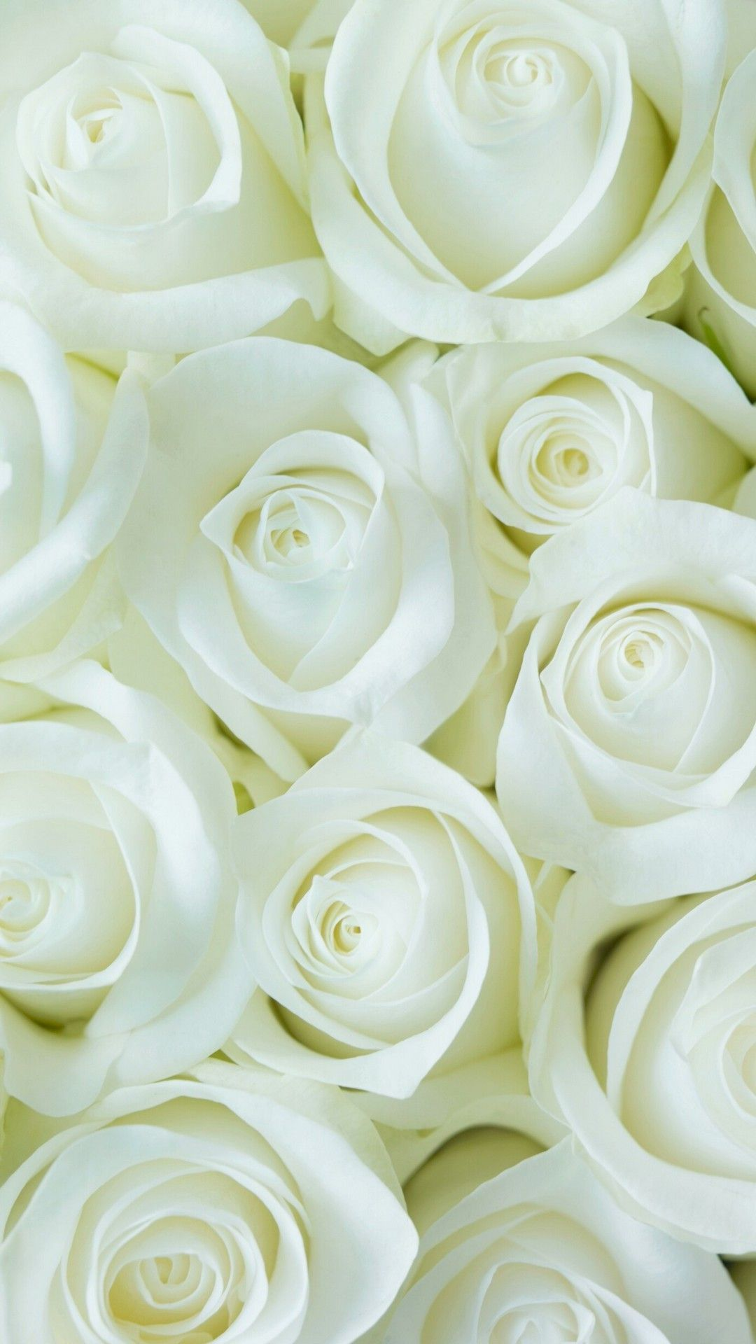 White Flower Hd Wallpapers Top Free White Flower Hd Backgrounds Wallpaperaccess