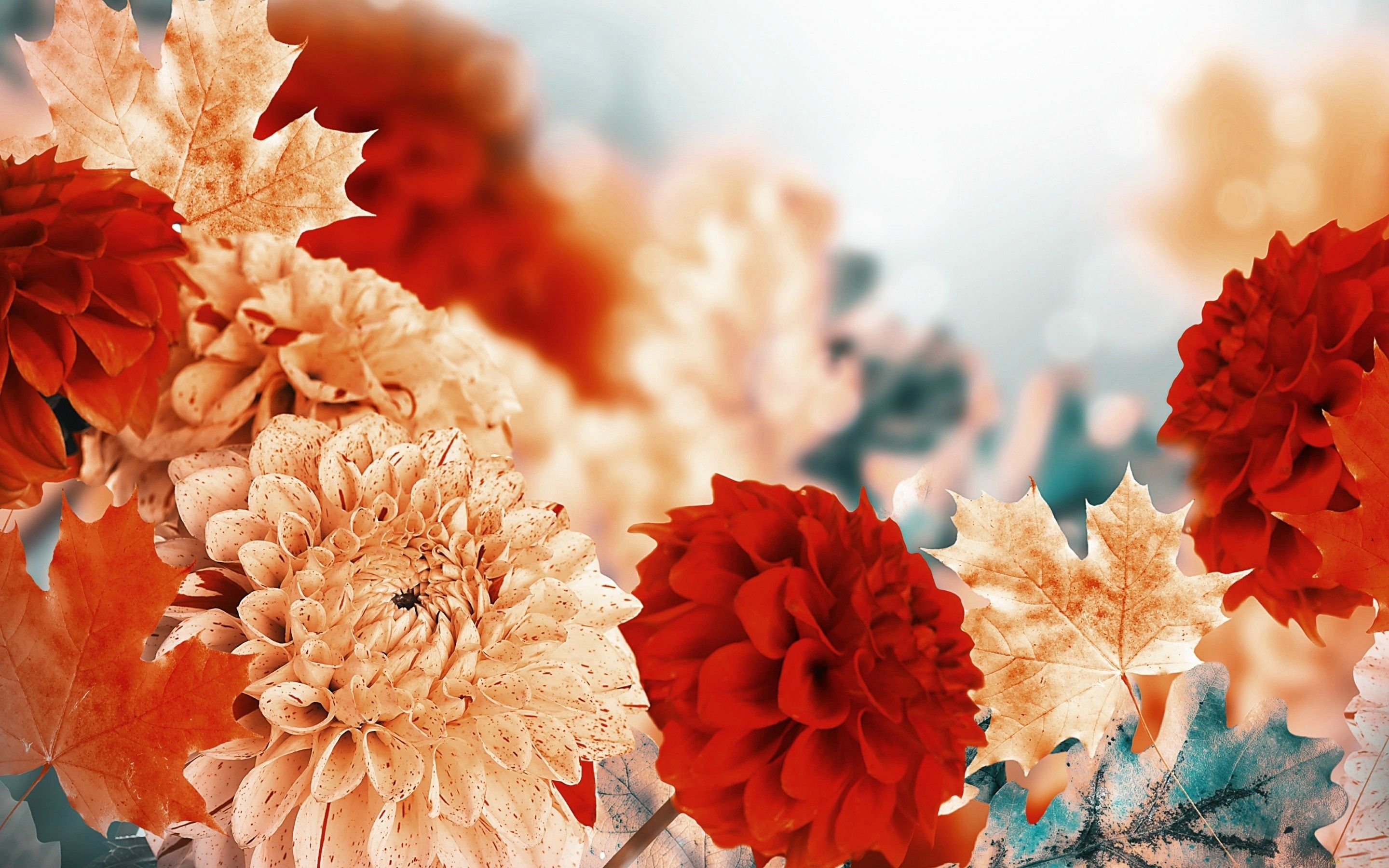 Fall Flowers Wallpapers Top Free Fall Flowers Backgrounds Wallpaperaccess