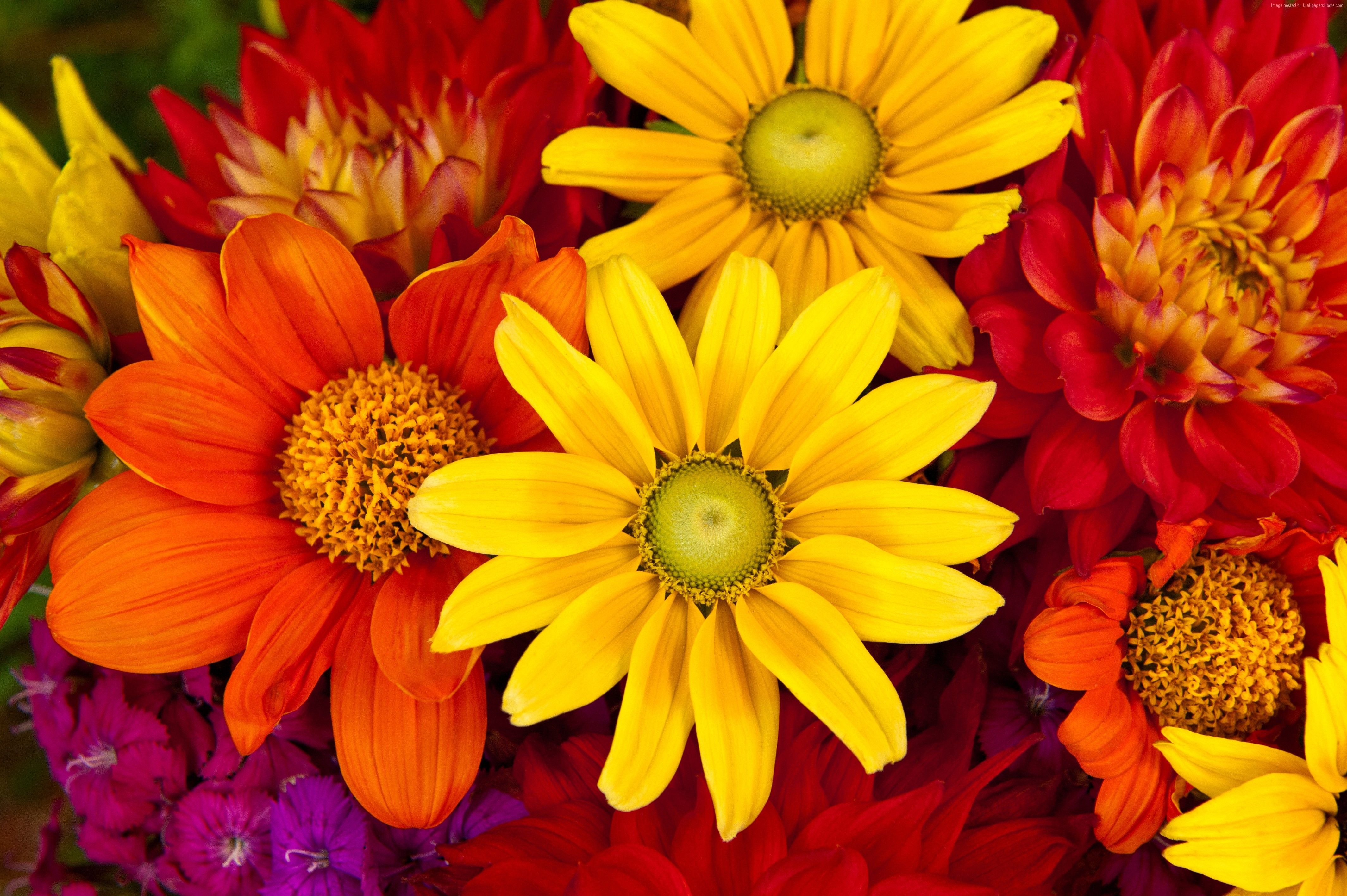 Fall Flowers Desktop Wallpapers Top Free Fall Flowers Desktop Backgrounds Wallpaperaccess