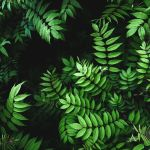 Green Leaves Wallpapers Top Free Green Leaves Backgrounds Wallpaperaccess