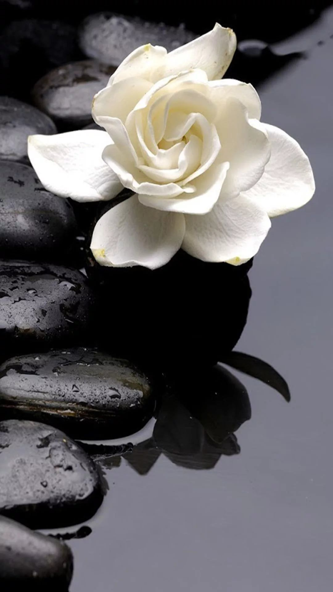 Black And White Flower Iphone Wallpapers 20 Images Wallpaperboat