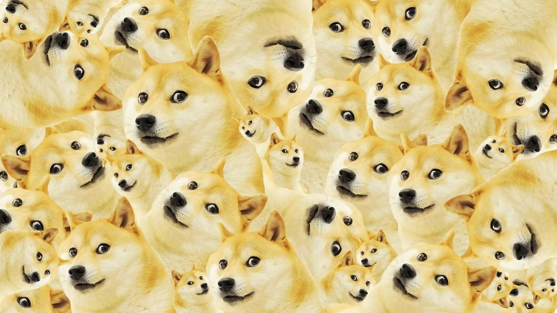 Doge Meme Wallpaper 1920x1080 Wallpapers Hd Quality