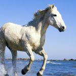 15 Winter Horse Iphone Wallpapers Wallpaperboat