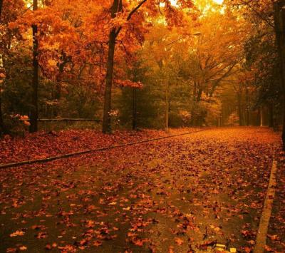 Free Autumn Wallpapers For Desktop - Wallpaper Cave