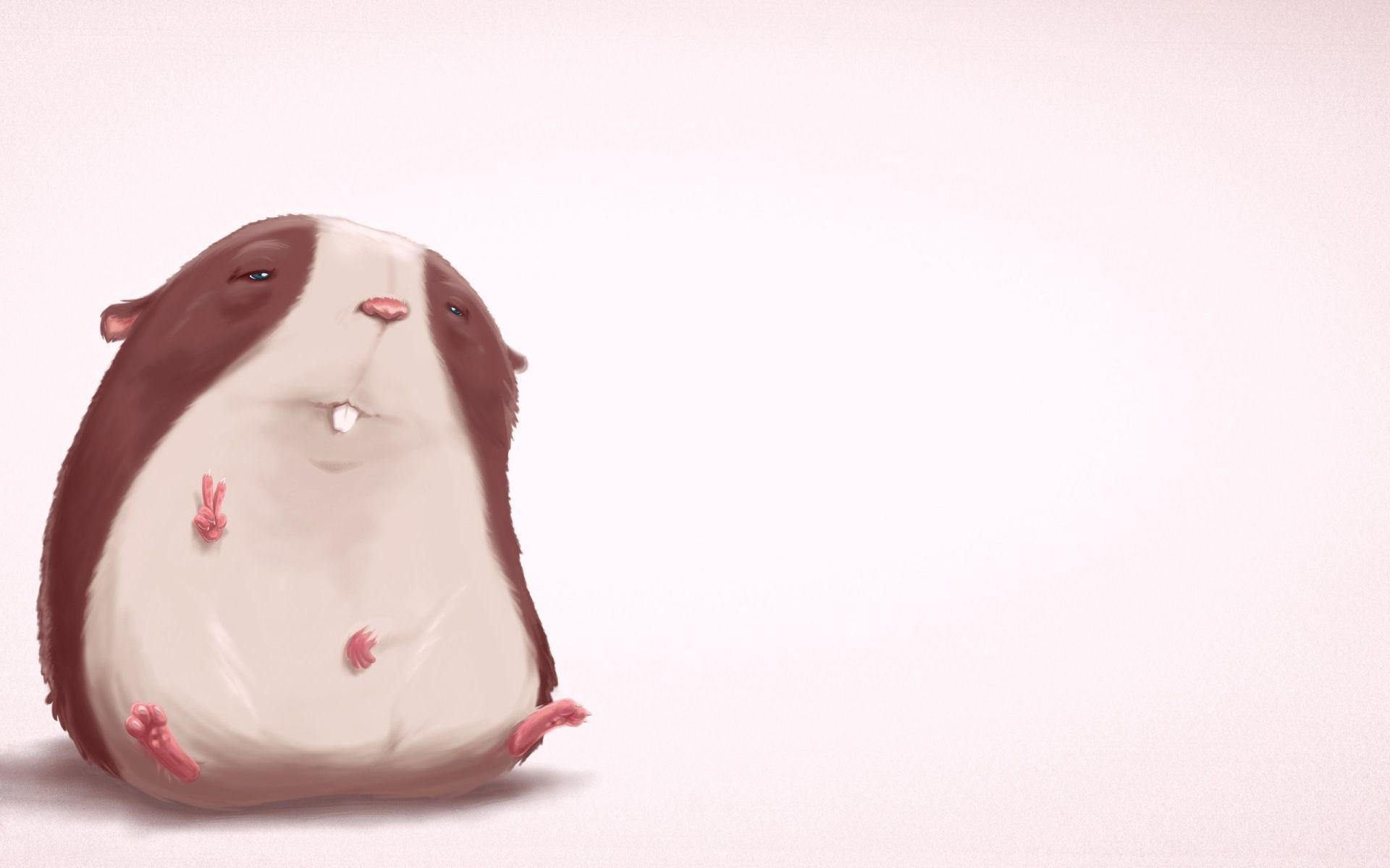funny hamster wallpapers - wallpaper cave