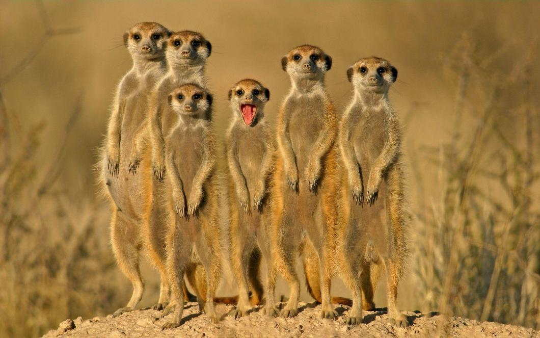 Funny animal wallpaper pics gendiswallpaper funny animal backgrounds wallpaper cave sciox Gallery