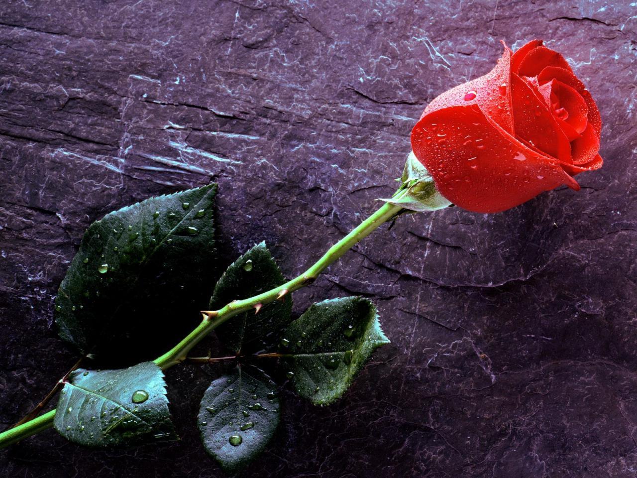 On Behalf Of Love Flower Photography Wallpaper WallDevil