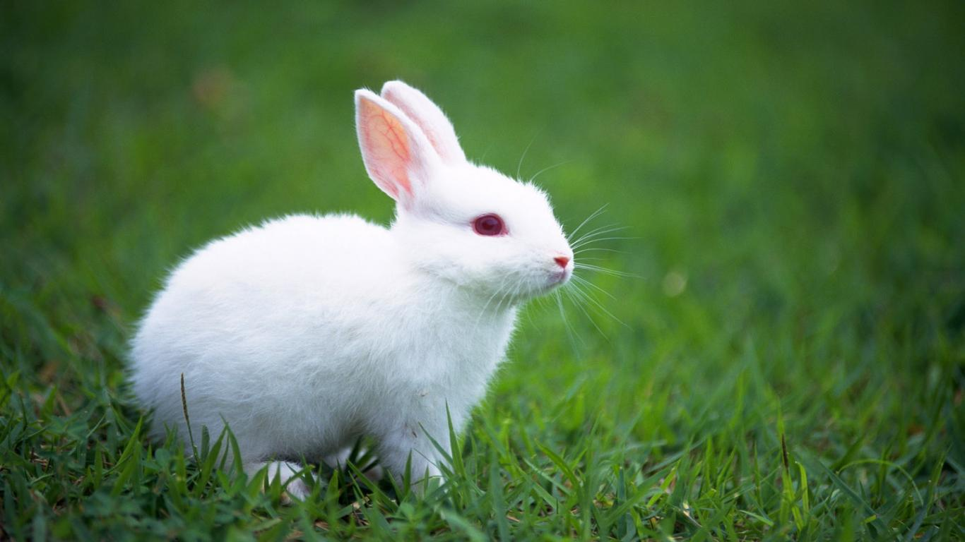 cute bunny backgrounds - wallpaper cave