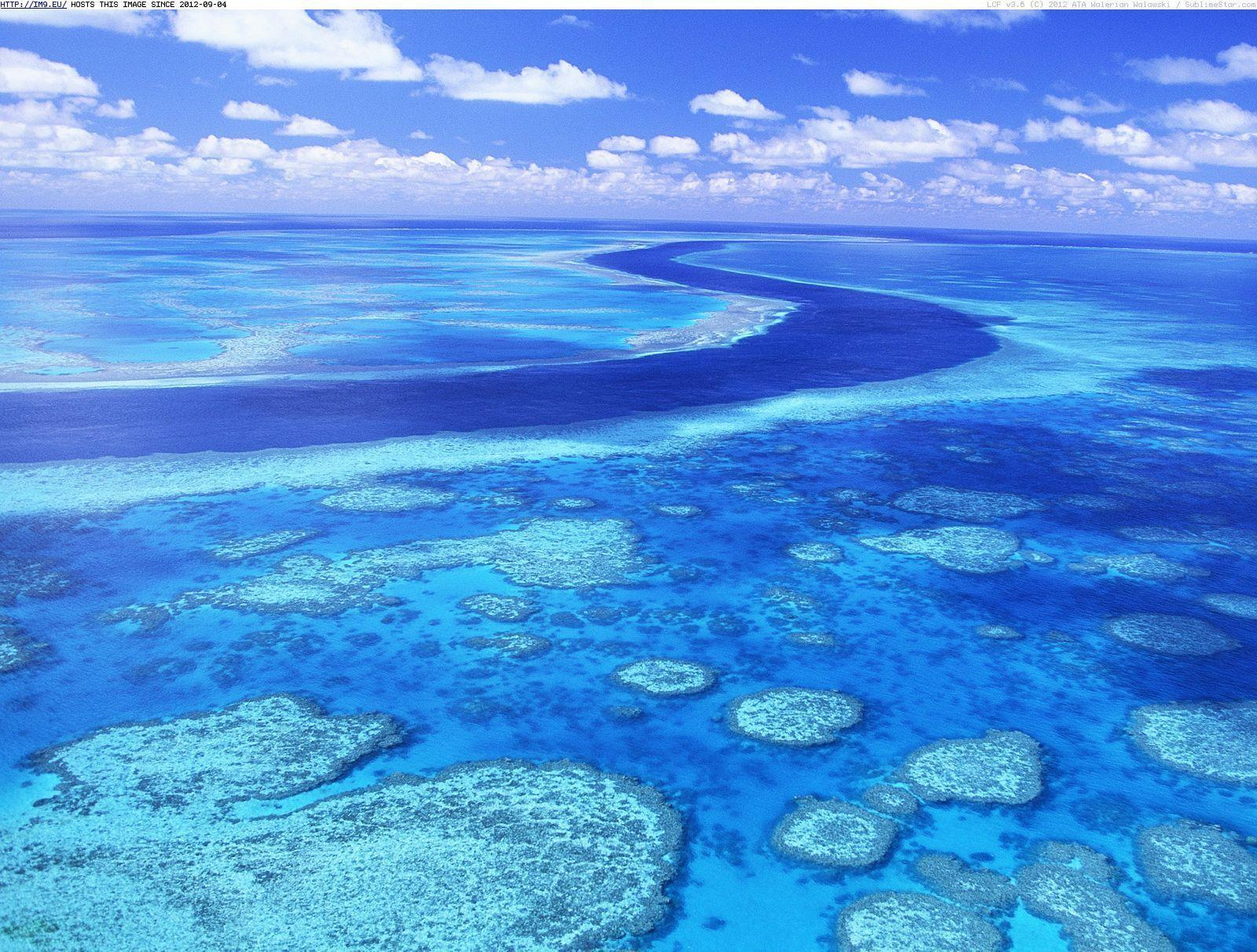 Reef Wallpaper Hd Wallpapers