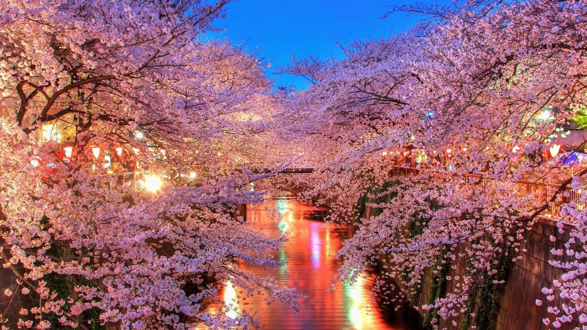 תוצאת תמונה עבור blossom vintage