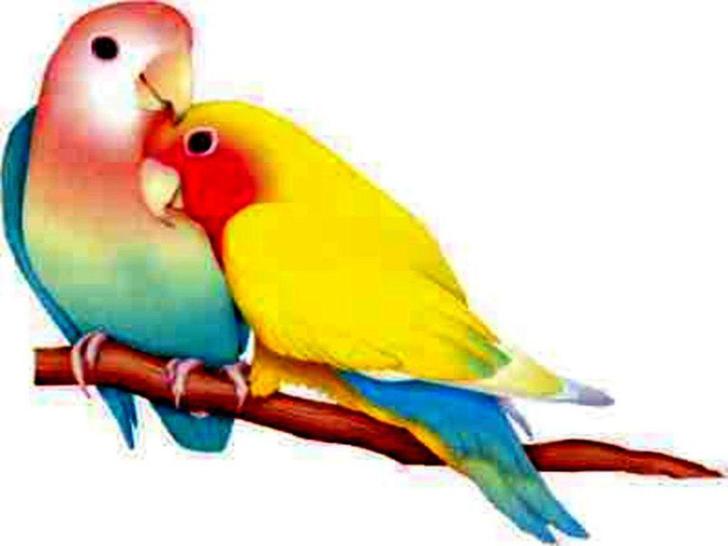 Love Birds Wallpapers Wallpaper Cave