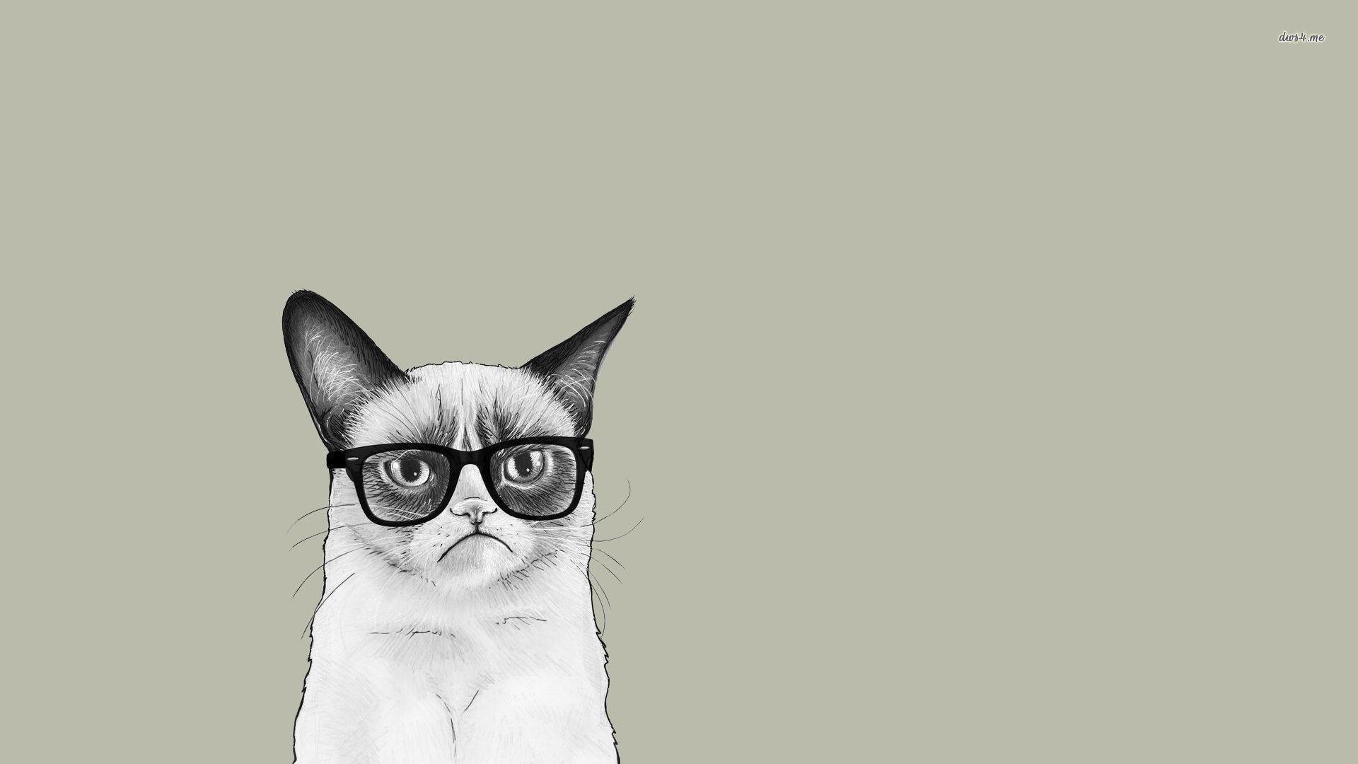 Grumpy Cat Wallpapers Wallpaper Cave